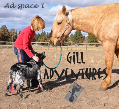 gill adventures banner 1