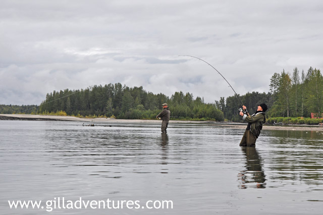 Fish On on the Yentna River during Silver Salmon season