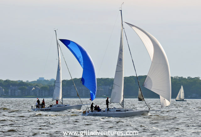 Wednesday night sailboat races in Annapolis, Maryland, on the Chesapeake Bay.