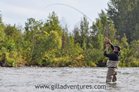 fish on - fly fishing for salmon on lake creek