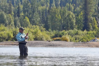 Fish On during the silver salmon run on the Talachulitna River