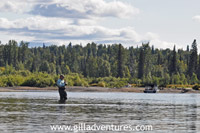 fly fishing for silver salmon on the Talachulitna River