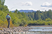 Catching silver salmon on the Talachulitna River, Alaska