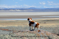 brittany looking at the Alvord Desert