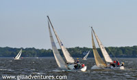 Sailboat races in Annapolis, Chesapeake Bay