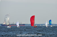 Wednesday night sailboat races in Annapolis with spinnakers out