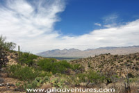 View of Tucson and the Santa Catalinas from Saguaro National Park East