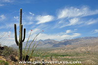 Saguaro and the Santa Catalina Mountains from Saguaro National Park East