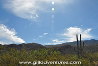 open country in Saguaro National Park East, below the Rincon Mountains