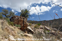 hillsde in ventana canyon on trail