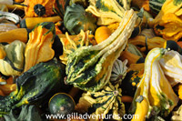 gourds and pumkins