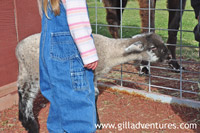 petting zoo at the central oregon pumpkin co