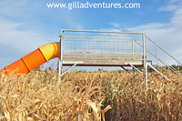 bridge and slide in the corn maze