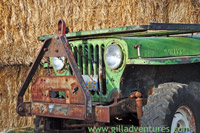 old jeep willys at the corn maze