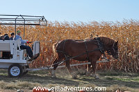 horse pulling wagon in corn field