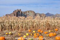 smith rocks over pumkin patch