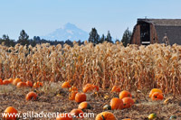 barn and view over pumkin patch