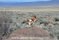 dog looking at the alvord desert, near fields denio road