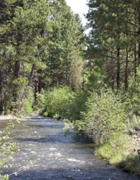 The canals at Rock Springs Guest Ranch