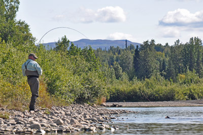 Fly fishing the Talachulitna River for Silver Salmon